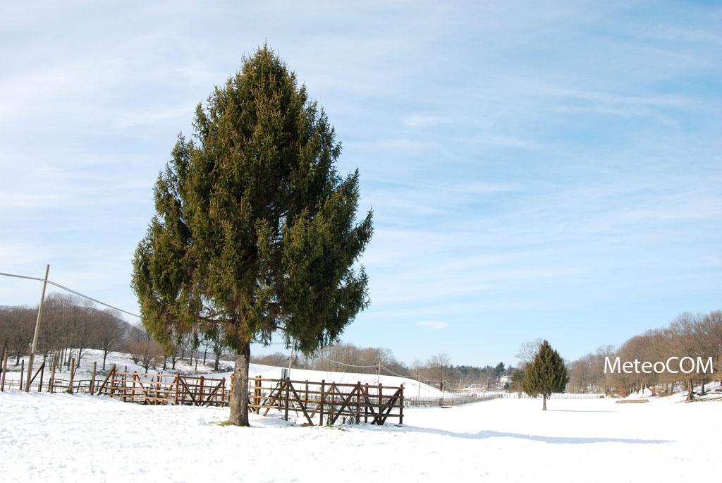 You are browsing images from the article: L'avvezione fredda del 12 febbraio 2010 nei Castelli Romani